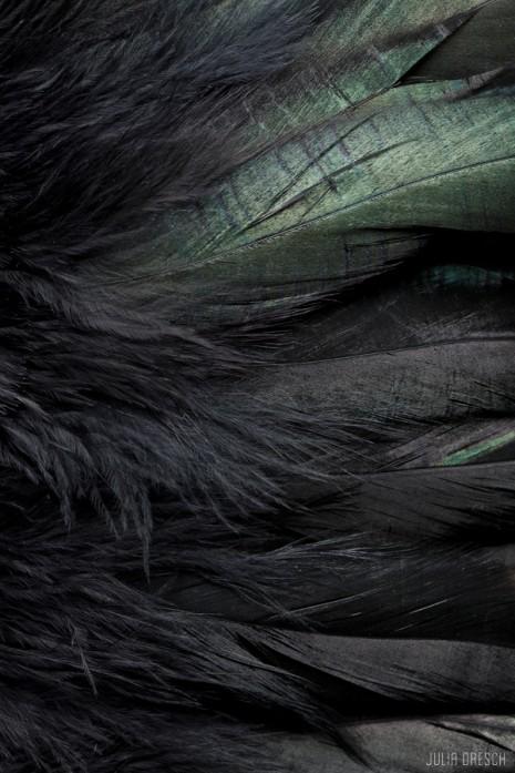 blackbird_9073-print